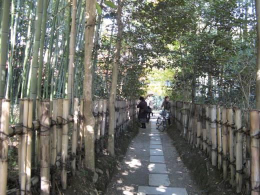 竹の道.jpg