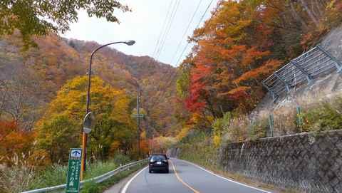 紅葉の道.jpg