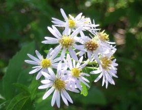 野の花.jpg