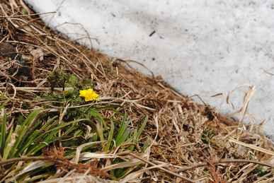 雪と花.jpg