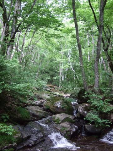 滝 と新緑.jpg